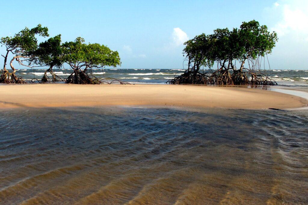<b>Ilha do Marajó</b><br>A maior ilha fluvial do mundo tem sítios arqueológicos, cerâmica marajoara e um ambiente bem rústico. É banhada pelo Oceano Atlântico e pelos rios Amazonas e Tocantins.